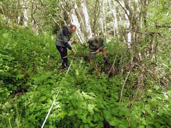 Illustration du suivi de terrain 2020 de Chrysosplenium alternifolium