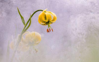 Déclic nature 2020, une édition spéciale Floralab dédiée à la flore pyrénéenne